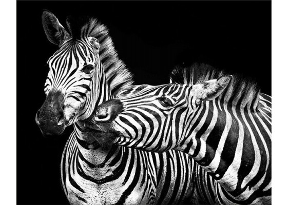 Картина Zebras family 75х100 cm